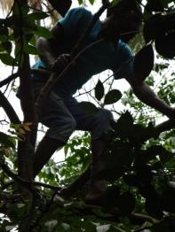 Mann im Baum