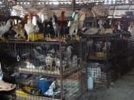 Hühnermarkt