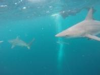 und hier das Hilfsseil der Taucher, Schnorchler und Haie :)