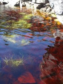 See auf dem Tafelberg