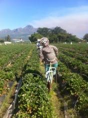 Erdbeerfarm