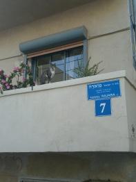 Eine der tausenden Katzen, die durch die Stadt streunern und von allen gemeinschaftlich gefüttert werden.