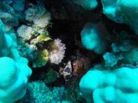 leopard moray