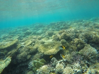 Korallen über Korallen