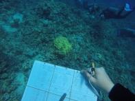 Unsere Dakumentation unter Wasser