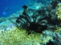 Koralle und Seestern