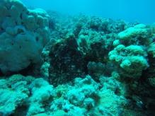 Der Oktopus neben der Leine