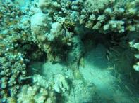 wenn man genau hinguckt, erkennt man zwei Stonefish