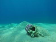 Bannerfish Bay