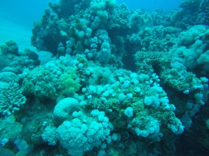 Feather corals vorne linke