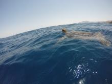 Mein Schildkrötenfreund