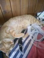 Ginger wollte unbedingt mit Schnorcheln kommen, ist dann aber leider eingeschlafen