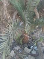 Katzenbaby in Palme