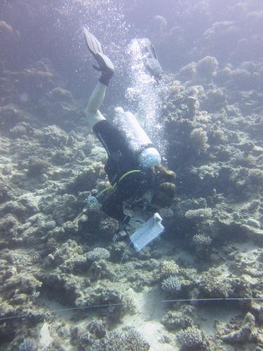 Das bin ich beim Korallen-Identifizieren